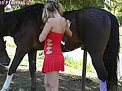 Best Horse Sex