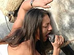 Dutch Castings Bestiality Orgy